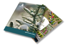 Dutchman Tree Farms Catalog